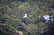 Cockatoo in flight photo