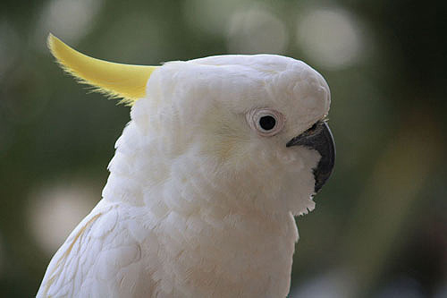 Cockatoo photos