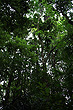 Rainforest Canopy photo