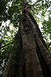 Rainforest Tree photo