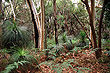 Grass Tree & Eucalypt Forest photo