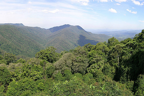 Dorrigo National Park photos
