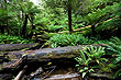 Temperate Rainforest photo
