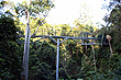 Tamborine Rainforest Skywalk photo