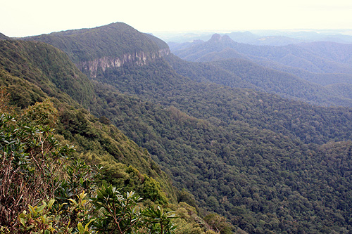 Springbrook National Park photos