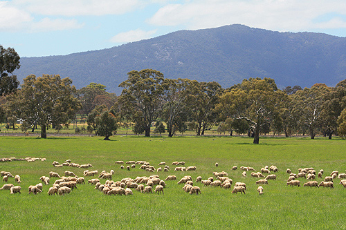 Australian Sheep Farm photos