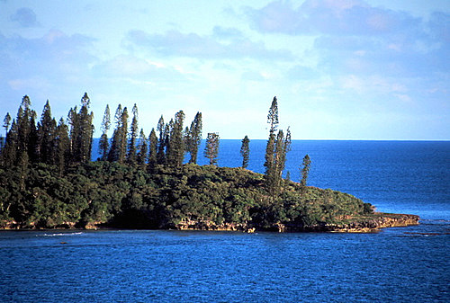 Flora of New Caledonia photos