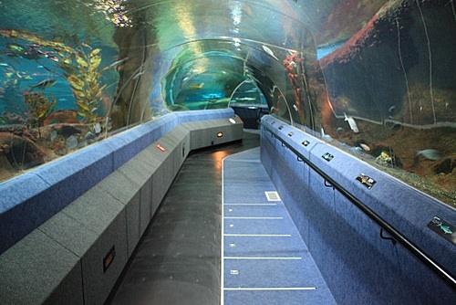 National Aquarium of New Zealand photo