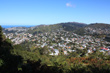 Wellington Suburbia photo