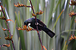 Tui and Flax photo