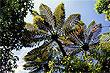 Negro helechos arborescentes foto