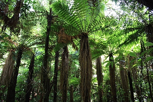 NEw Zealand Rainforest photo