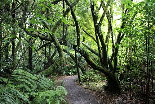 New Zealand Temperate Rainforest photos