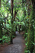 New Zealand Rainforest photos