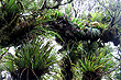 Rimutaka Rainforest photos