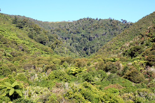 Rimutaka Forest Park photos