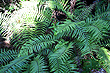 Pupu Springs Ferns photo