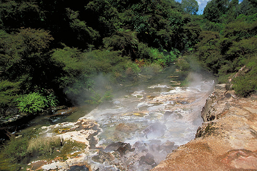 thermal river in waimangu photo