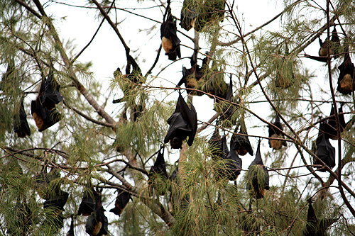 Fruit Bats photo